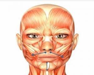 Imagen ilustrativa de cómo realizar los masajes relajantes para los dolores causados por el bruxismo: desde el centro de los labios hacia afuera