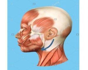 Imagen ilustrativa de cómo realizar los masajes relajantes: desde debajo de la oreja hasta debajo de la quijada