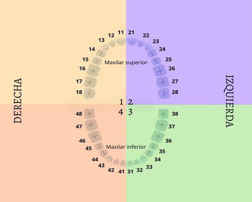 Nombre y numeración de los dientes